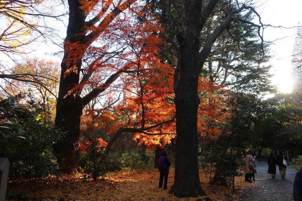 Shinjuku Gyoen National Garden in Tokyo, Japan