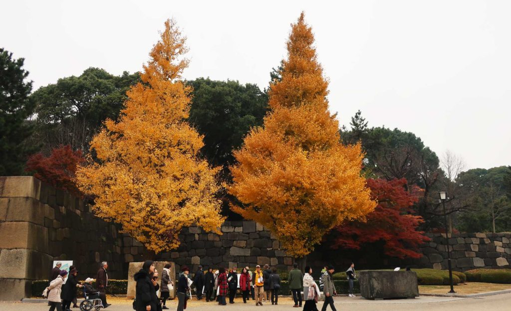 Imperial Palace East Gardens in Tokyo, Japan