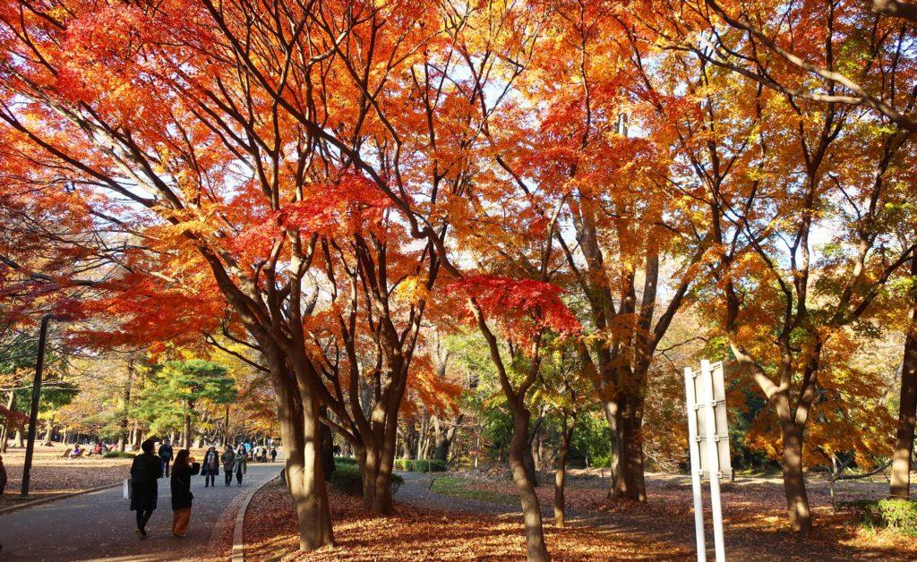 Yoyogi Park in Tokyo, Japan