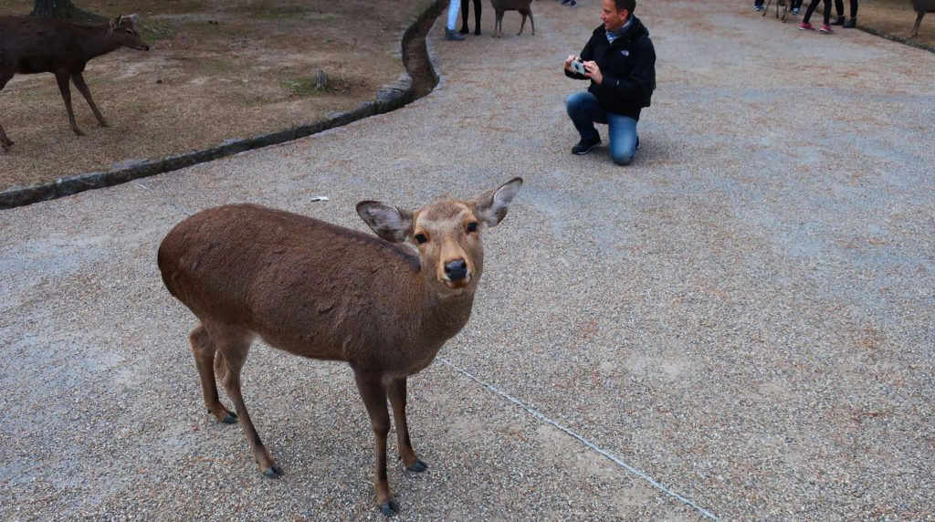 Nara Park in Nara, Japan