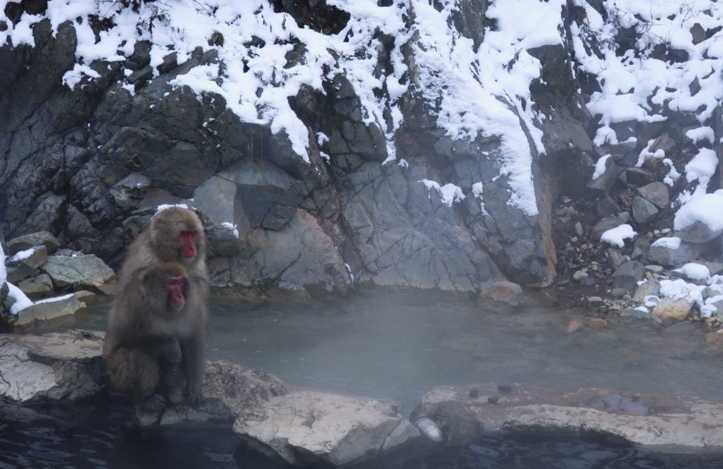 Jigokudani Monkey Park in Nagano, Japan