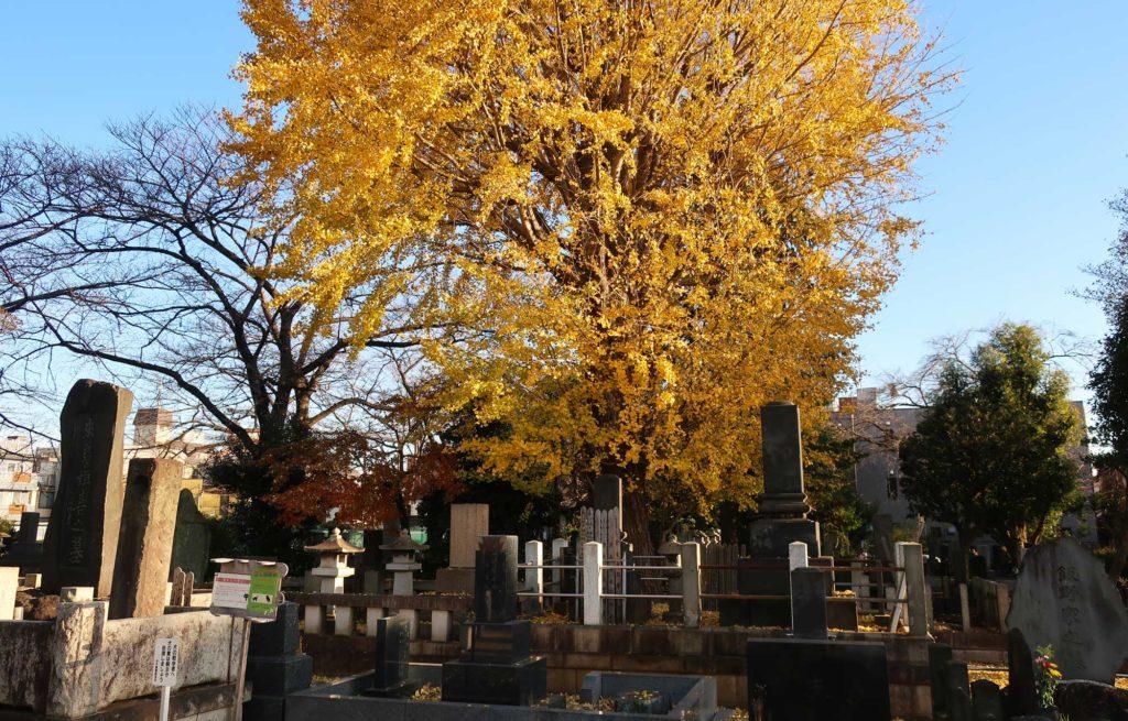 Yanaka Cemetery in Tokyo, Japan