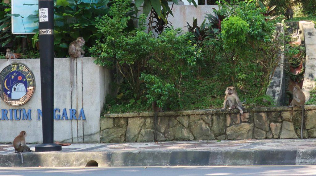 Monkeys in Kuala Lumpur